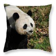Amazing Giant Panda Bear Sitting In A Grass Field Throw Pillow