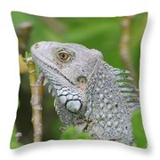 Amazing Gray Iguana Sitting In The Top Of A Bush Throw Pillow