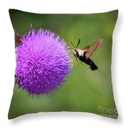 Amazing Insects - Hummingbird Moth Throw Pillow