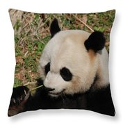 Amazing Panda Bear Holding On To Shoots Of Bamboo Throw Pillow
