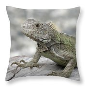 Amazing Posing Gray Iguana Perched On A Log Throw Pillow