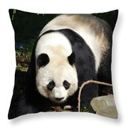 Amazing Sweet Chinese Giant Panda Bear Walking Around Throw Pillow