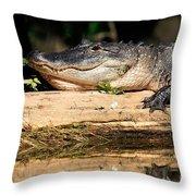 American Alligator Suns Itself Throw Pillow