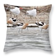 American Avocets  Throw Pillow