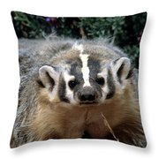 American Badger On Alert Throw Pillow