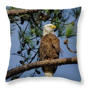 American Bald Eagle 2 Throw Pillow