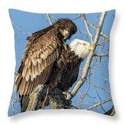 American Bald Eagle 2017-19 Throw Pillow