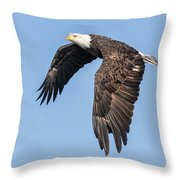 American Bald Eagle 2017-5 Throw Pillow