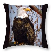 American Bald Eagle - Iowa Throw Pillow
