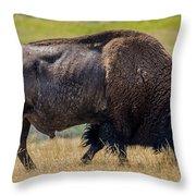 American Bison - Antelope Island - Utah Throw Pillow
