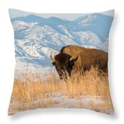 American Bison In Front Of The Rocky Mountains Throw Pillow