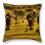 American Bison Sunset March Throw Pillow