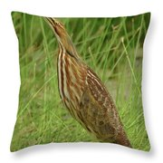American Bittern Looking Up Throw Pillow