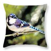 American Blue Jay On Alert Throw Pillow