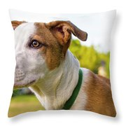 American Breed Brown Eyes Throw Pillow