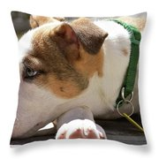 American Breed Puppy Throw Pillow