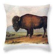American Buffalo, 1846 Throw Pillow