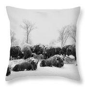 American Buffalo #3 Throw Pillow