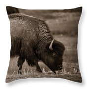 American Buffalo Grazing Throw Pillow
