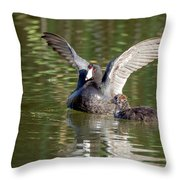 American Coot Adult And Juvenile Throw Pillow