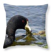 American Coot Feeding Throw Pillow