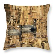 American Coots Throw Pillow