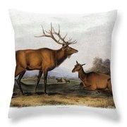 American Elk, 1846 Throw Pillow