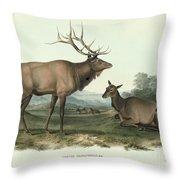 American Elk Throw Pillow