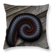American Giant Millipede Throw Pillow by April Wietrecki Green