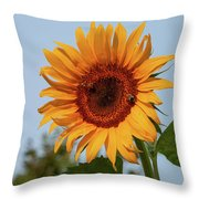 American Giant Sunflower In The Morning Throw Pillow