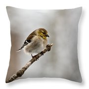 American Golden Finch Winter Plumage 1 Throw Pillow