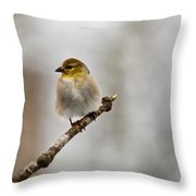 American Golden Finch Winter Plumage 4 Throw Pillow