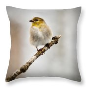 American Golden Finch Winter Plumage 6 Throw Pillow