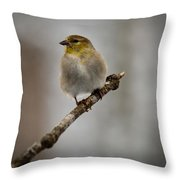 American Golden Finch Winter Plumage Throw Pillow