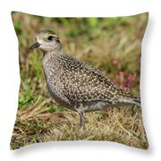 American Golden Plover Throw Pillow