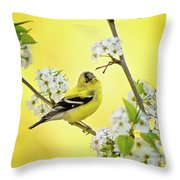 American Goldfich Male Throw Pillow