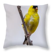 American Goldfinch Front Throw Pillow