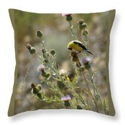 American Goldfinch Having Lunch On Bakery Hill Throw Pillow