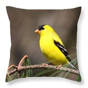 American Goldfinch II Throw Pillow
