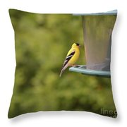 American Goldfinch No Food  Throw Pillow
