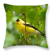 American Goldfinch Sittin' In A Tree Throw Pillow
