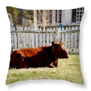 American Milking Devon In Spring Throw Pillow