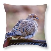 American Mourning Dove Throw Pillow