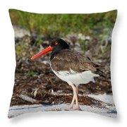 American Oyster Catcher Throw Pillow