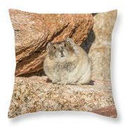 American Pika Focuses On The Camera Throw Pillow