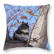 American Red Squirrel Throw Pillow
