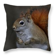 American Red Squirrel Portrait Throw Pillow
