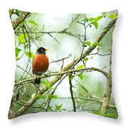 American Robin On Tree Branch Throw Pillow