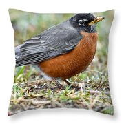 American Robin With Muddy Beak Throw Pillow