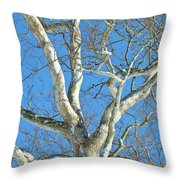 American Sycamore - Platanus Occidentalis Throw Pillow